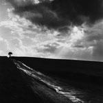 Vexin, le plateau d'Auvers-sur-Oise (10)