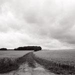 Vexin, le plateau d'Auvers-sur-Oise (4)