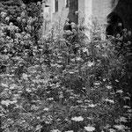 Le jardin médiéval (11)