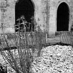 Le jardin médiéval (13)