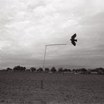 le vol du leurre,  plateau d'Auvers sur Oise  (1)