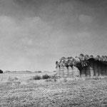 Vexin, le plateau d'Auvers-sur-Oise (18)