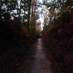 En forêt en aquittant St Jacques de Compostelle