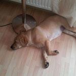 Halkins Unya-Luna - erst mal lange schlafen...