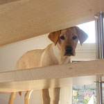Halkins To Do Greta - Blick durch die hohle Treppe