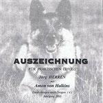 Drogenspürhund - Halkins Amon