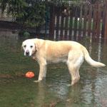 Halkins Justus - Überschwemmung im Garten