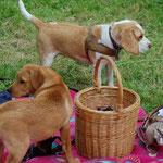 Halkins Up and Down Fritzi beim Picknick