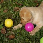 welchen Ball soll ich jetzt nehmen?