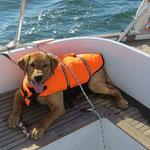 Halkins Uncle Sam - auf großer Bootsfahrt
