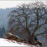 Baumgestalt im Steinwald