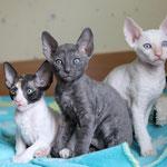 Помет А 2 кошечки 1 котик