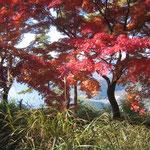 葛籠尾岬の紅葉