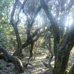 La Gomera Parque nacional
