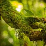 Regenwald um das Hotel Rancho Naturalista