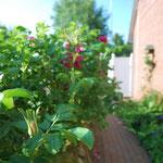 sonniger Garten an der Seite des Hauses