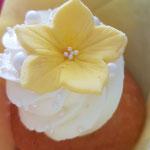 Lemon and Limoncelllo, CupCakes Den Bosch