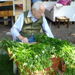 offene Werkstatt Gudwork, Berufskraut wird zum trocknen vorbereitet, Kräuterworkshop