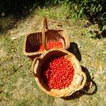 die Ernte nach etwa 2 Stunden,, Kräuterworkshop