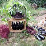 Holunderblüten Stilleben, Holundersirup in Flaschen,