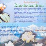 Sherpa Herbs, Rhododentron Tea, 6 euro, Kräutertee vom Fuße des Mount Everest, in 4000 meter Höhe gewachsen