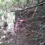 Sicht auf die obere Gartenhütte. Faszinierend der von links hereinwuchernde Baum