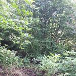Aktuelle Aussichtslage vom Grundstück aus in Richtung Württemberg