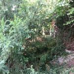 Blick zur Hütte (Entfernung circa 10m)
