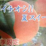 新商品!!(7・8月の夏季限定)