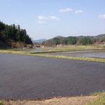 4月19日:店舗隣の田んぼに水が入りました