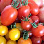 たわわに実ったトマト