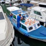 Zadar, pêcheur faisant sécher des étoiles de mer