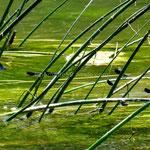 Parc de Krka, les libellules bleues