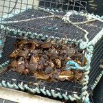 Panier de crabes!