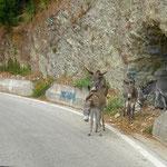Des ânes en liberté sur la route