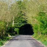 La route s'engouffre dans un tunnel végétal