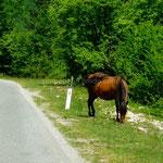 Sur le bord de la route un cheval broute tranquillement
