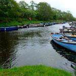 Les barques de pêche attendent leurs propriétaires sur le Lough Leane