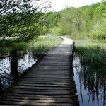 Nous marchons le plus souvent sur des chemins faits en rondins au ras de l'eau.