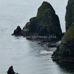 De noirs rochers émergent de la mer