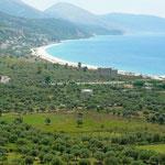 La plaine est plantée d'oliviers
