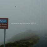 Au sommet de Horn Head, le brouillard nous cache le panorama