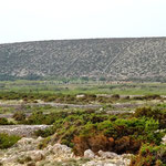 L'île de Pag est quadrillée de murets de pierres