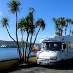 Au milieu des palmiers à Castletown Berehaven