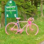 vélo rose...