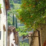 Kotor: des orangers