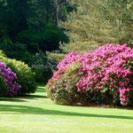 Le parc de Muckross House