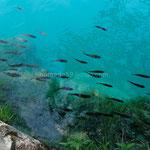 L'eau est si transparente qu'on dirait un aquarium.