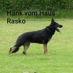 *Hank vom Haus Rasko IGP 3 / André Joost