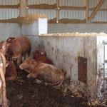 Abtrennung in der Rinderhaltung
